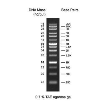 DM013-R500 XLarge DNA Ladder RTU